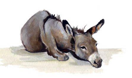 Etre un âne... dans actualite de retaite nfv3bzr0